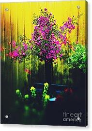Sweet Boronia Acrylic Print by Blair Stuart