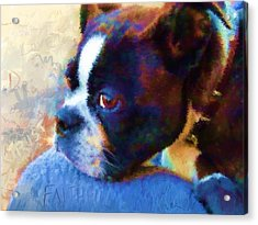 Sweet Boston Betty Acrylic Print