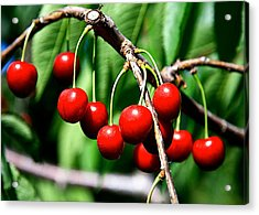 Sweet Cherry Pie Acrylic Print by Robert Pearson