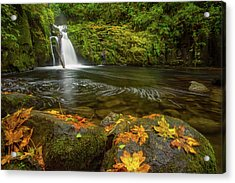 Acrylic Print featuring the photograph Sweet Creek Falls In Autumn by Patricia Davidson