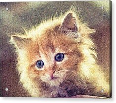 Sweet Ginger Fuzz Acrylic Print