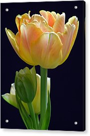 Sweet Happiness Acrylic Print by Juergen Roth