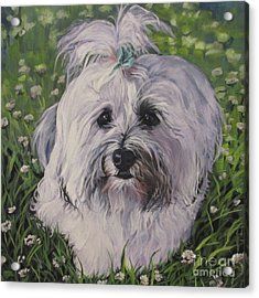 Acrylic Print featuring the painting Sweet Havanese Dog by Lee Ann Shepard