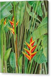 Sweet Heliconias Acrylic Print by Anji Worton