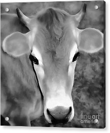 Acrylic Print featuring the painting Sweet Jersey Girl - Jersey Cow by Janine Riley