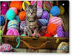 Sweet Kitten In Suitcase Acrylic Print