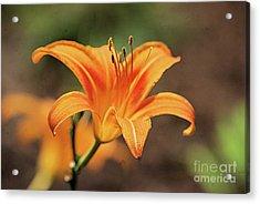 Sweet Lilly In Orange Acrylic Print
