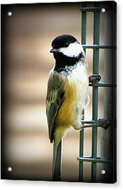 Sweet Little Chickadee Acrylic Print by Lisa Jayne Konopka