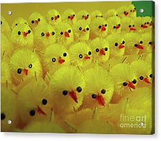 Sweet Little Chicks Waiting For Easter Acrylic Print