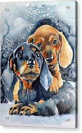 Sweet Little Dogs Acrylic Print by Kovacs Anna Brigitta