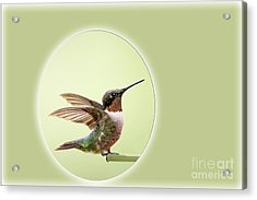 Sweet Little Hummingbird Acrylic Print by Bonnie Barry