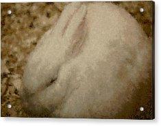 Sweet Marshmallow Acrylic Print