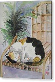 Sweet Nap Acrylic Print by Lian Zhen