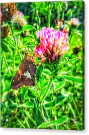 Acrylic Print featuring the photograph Sweet Nectar  by Jame Hayes
