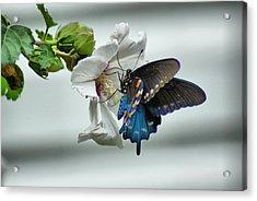 Sweet Nector Acrylic Print by Rick Friedle