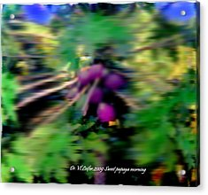 Sweet Papaya Morning Acrylic Print by Dr Loifer Vladimir