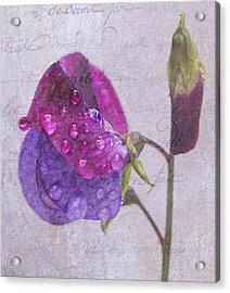 Sweet Pea Raindrops Acrylic Print