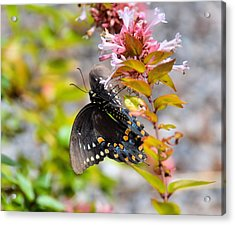 Sweet Pink Acrylic Print by JAMART Photography