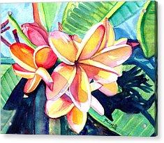 Sweet Plumeria 2 Acrylic Print