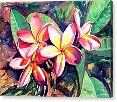 Sweet Plumeria Acrylic Print