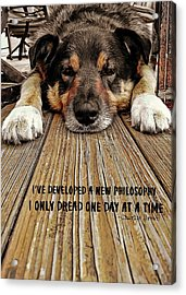 A Dogs Life Quote Acrylic Print by JAMART Photography