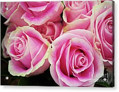 Sweet Rose For All The Lovely Ladies Who Comment On My Work Acrylic Print