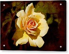 Sweet Rose Acrylic Print
