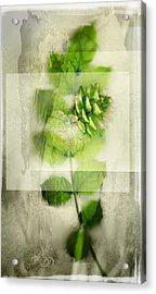 Sweet Rustic Pine Acrylic Print by Dan Turner