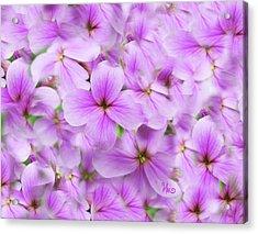 Sweet Spring Meadow Flox Acrylic Print