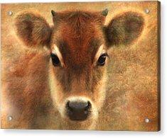 Sweet Sweet Baby Acrylic Print by Trudi Simmonds