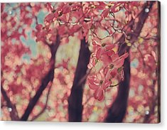 Sweet Sweet Love Acrylic Print