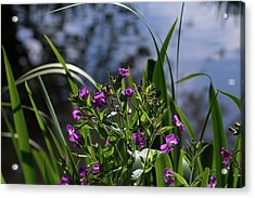 Sweet Violet Acrylic Print