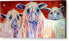 Sweet Wensleydales Sheep By M Baldwin Acrylic Print by Marcia Baldwin