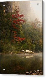 Sweetgum In The Mist At Steel Creek Acrylic Print