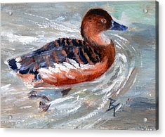 Acrylic Print featuring the painting Swimming Aceo by Brenda Thour