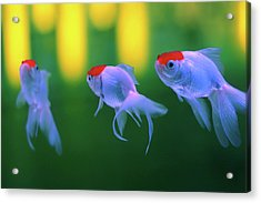 Swimming Fishes Underwater Acrylic Print by Yuki Crawford
