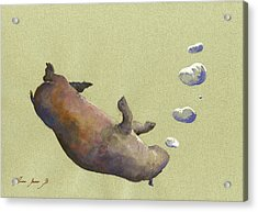 Swimming Hippo With Bubbles Acrylic Print