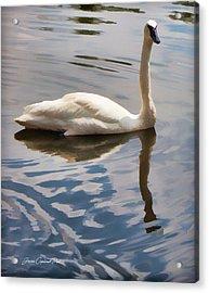 Swimming Swan Acrylic Print by Joann Copeland-Paul