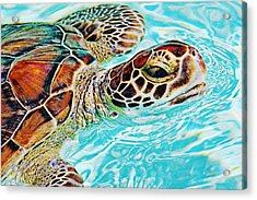 Swimming Turtle Acrylic Print