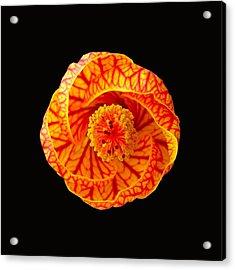 Swirl Acrylic Print by Kathy Daxon