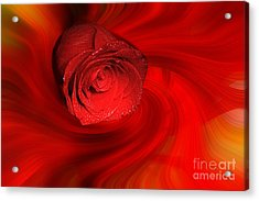 Swirling Rose Acrylic Print