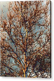 Sycamore Against November Sky Acrylic Print by Beth Akerman