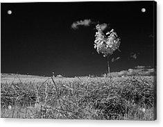 Sycamore Acrylic Print by Keith Elliott