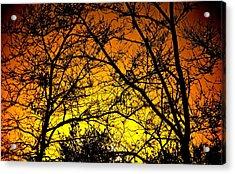 Sycamore Sunset Acrylic Print
