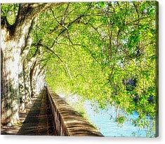 Sycamore Trees Along The Tiber River Acrylic Print by George Oze