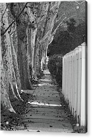 Sycamore Walk-grayscale Version Acrylic Print