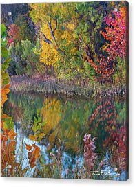 Sycamores And Willows Acrylic Print