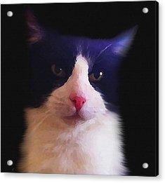 Sylvester Tuxedo Cat Acrylic Print