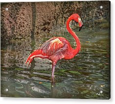 Acrylic Print featuring the photograph Symbol Of Florida by Hanny Heim