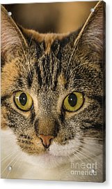 Symmetrical Cat Acrylic Print